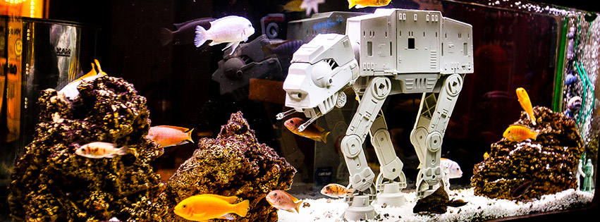 Orange rooms southampton our spaces fish tank tables for Star wars fish